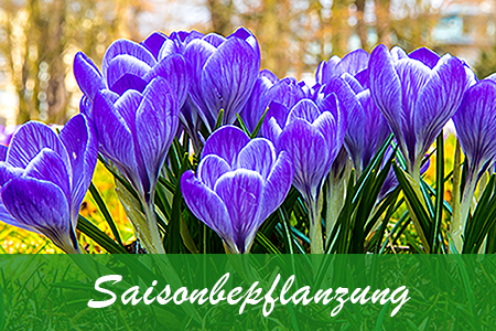 Saisonbepflanzung